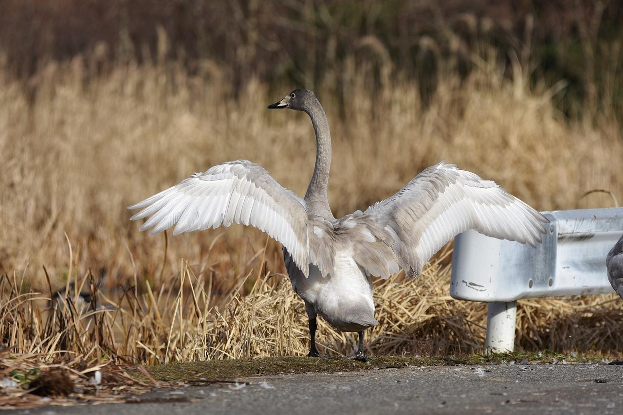 Ce păsări trăiesc în perechi toată viața. Cele mai temperamentale și mai fidele animale