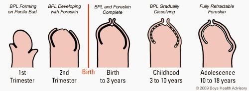 câte ani crește penisul)