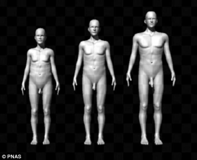 """Legătura """"SURPRINZĂTOARE"""" dintre înălţime, forma trunchiului şi mărimea penisului unui bărbat"""