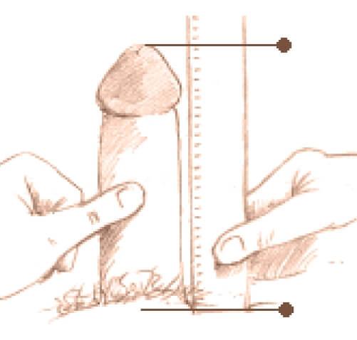 cum se mărește lățimea și lungimea penisului)