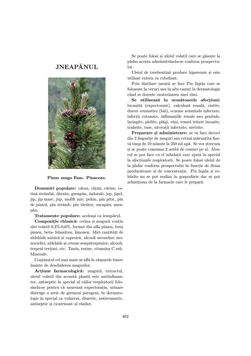 plantă erecto- reducătoare
