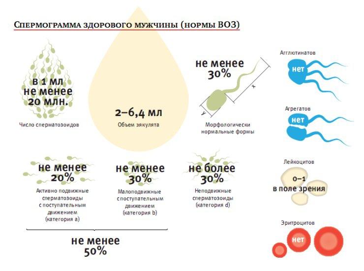 erecție cu ultrasunete a scrotului)