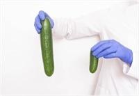 structura normala a penisului)