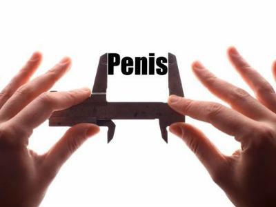 scara de măsurare a penisului