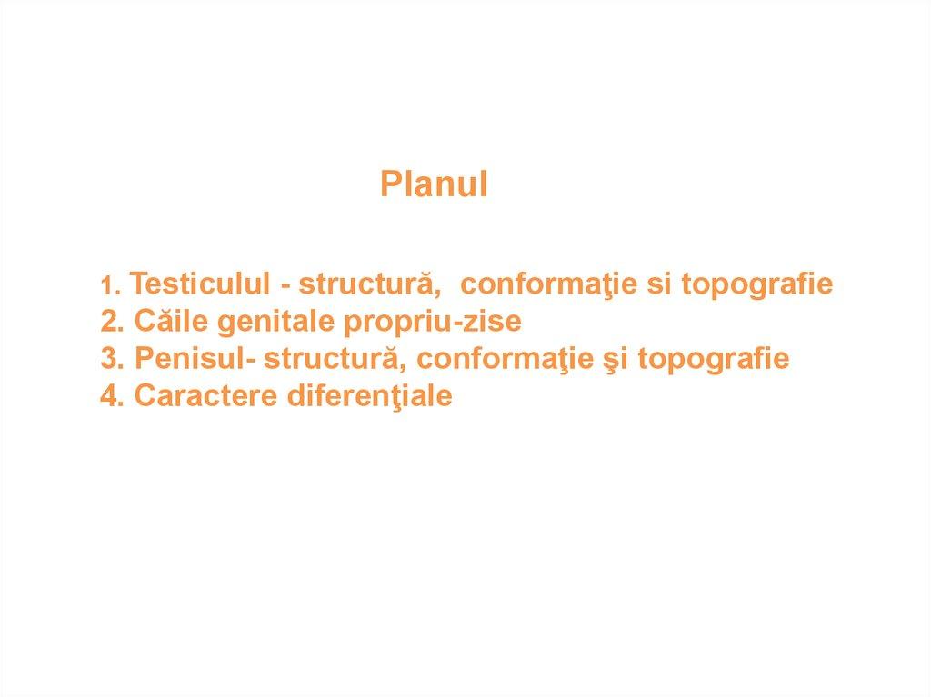 penisul ventral