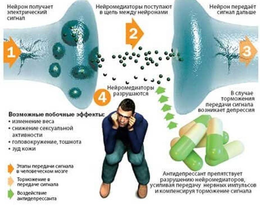 fenotropil și erecție)