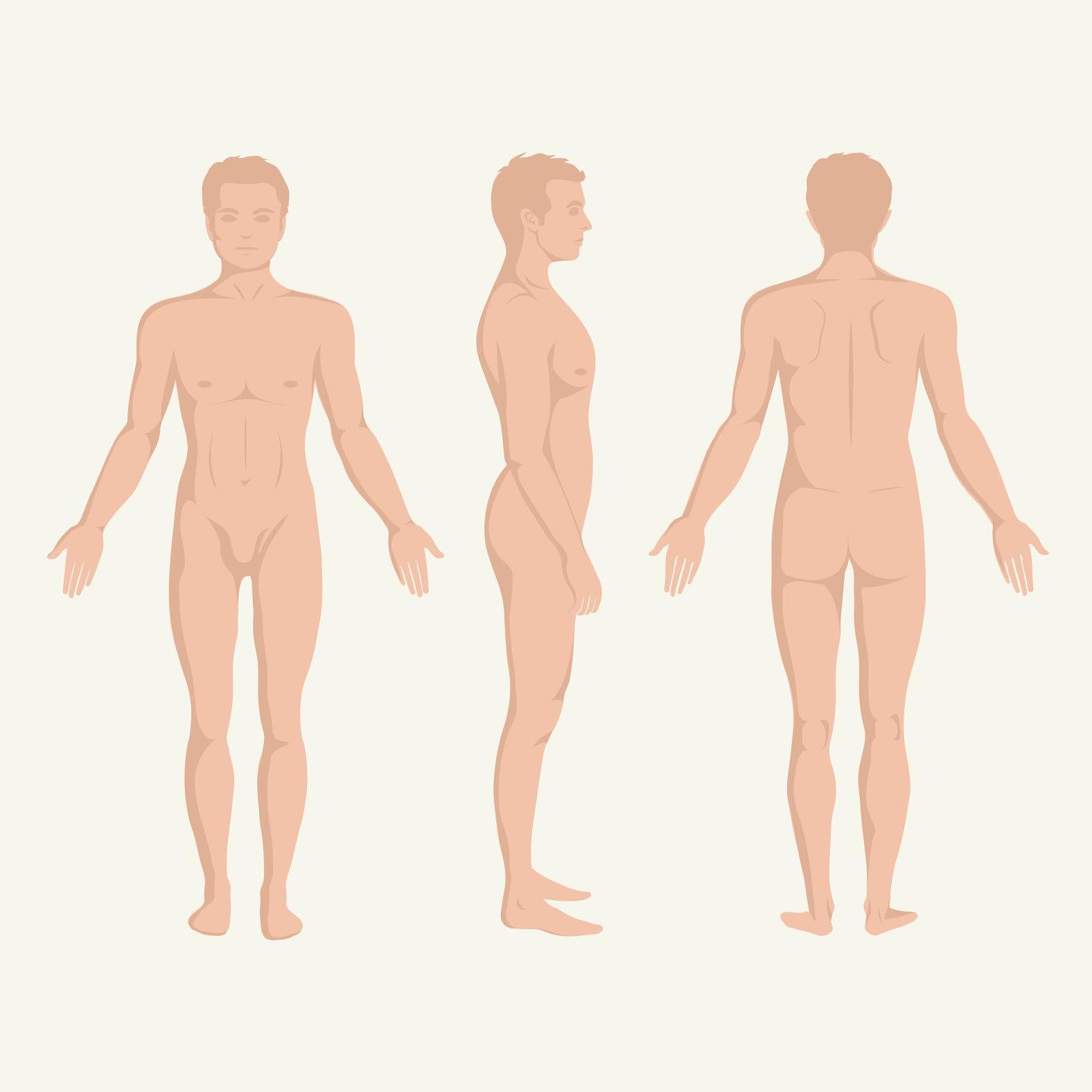 țesutul muscular al penisului
