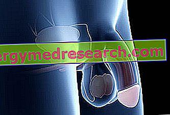 Sfatul Farmacistului: Penisul moale