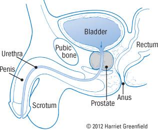 prostatita simptome erectie proasta