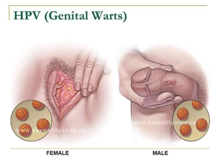 mărirea penisului și vitamina e