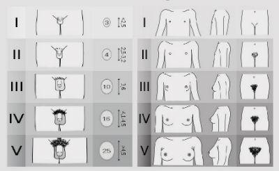 dimensiuni ideale ale penisului masculin)