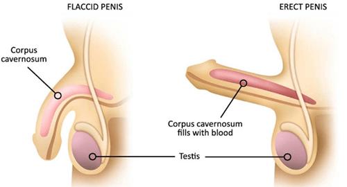 Potență și prostată | univegaconstruct.ro