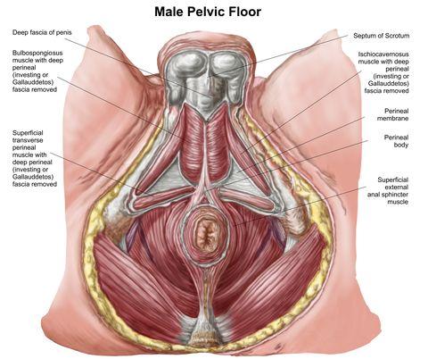 cum se mărește penisul fără medicament cum se face un extensor de mărire a penisului