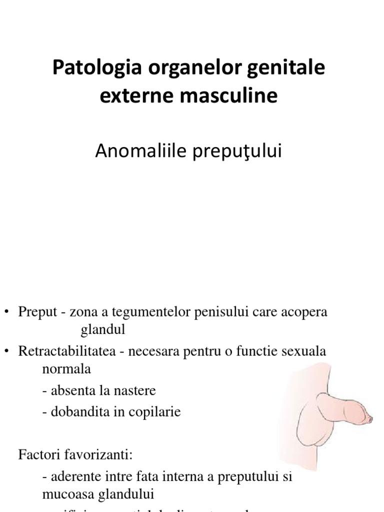 clasificarea penisului)