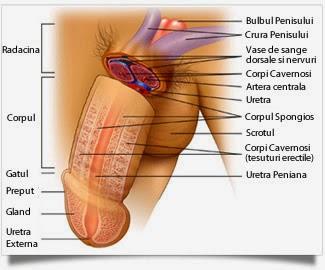 cum să recunoaștem o boală a penisului)