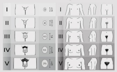 dimensiuni ideale ale penisului