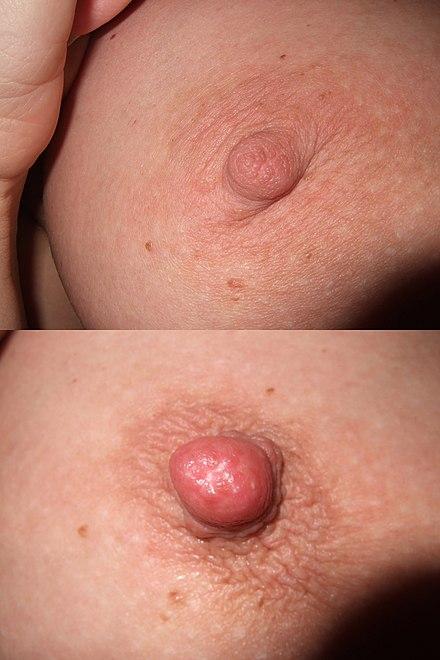 punct de erecție penis)