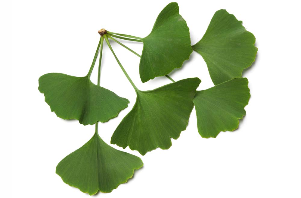 erecție plante medicinale