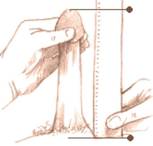 câți cm poate fi mărit penisul)