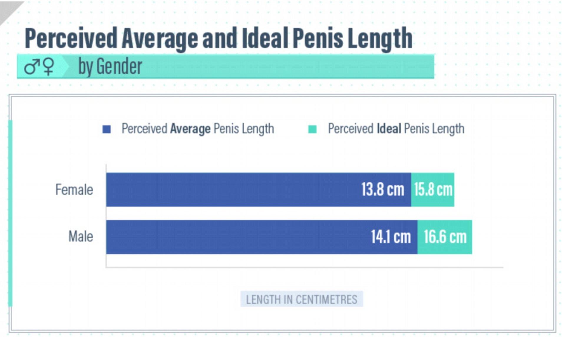 penis normal cm